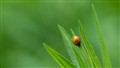 Ladybug heading down leaf