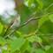Birds2018-53sm: OLYMPUS DIGITAL CAMERA