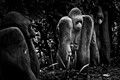Gorilla statues - Kirstenboch Gardens, Cape Town