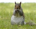 Squirell & Nuts