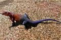 Tanzanian dragon