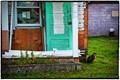 Cat With Green Door