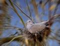 Dynamic Pigeon
