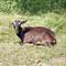 goat_20110108_151