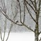 snow birds_8_v3