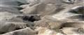 A Desertscape