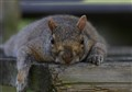 Where are my nuts?