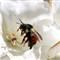 bumblebeecrop