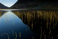 Reflected Reeds