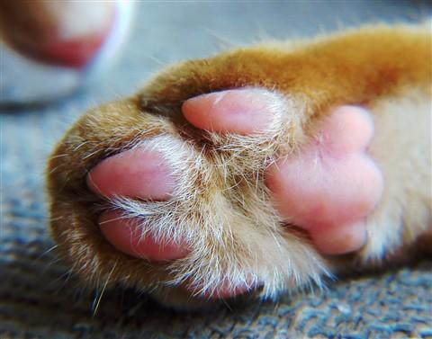 Phoeby's paw-s