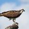 Birds/Bifs