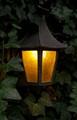 lamp & vines