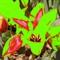 Gamut warning flower