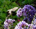 Catalina Island Moth
