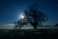 The first full moon in February called a Snow Moon. Windsor Great Park, Berkshire UK