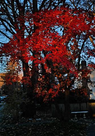Autumn in Croton