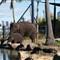 Baby elephant Sydney zoo