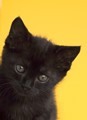 My little black kitten