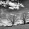 Stroud Trees Mono-1