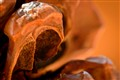 TELE: Pinecone cavern