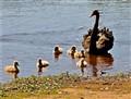 A mother's instinct is  ubiquitous!