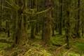 Glen Etive forest, Scotland
