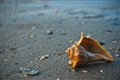 seashell_friend_inside