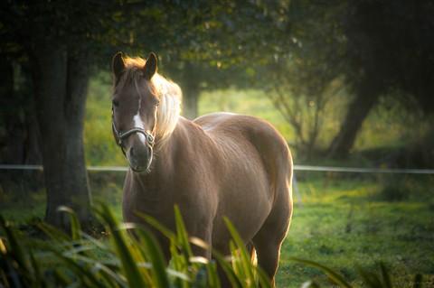blonde chestnut mare