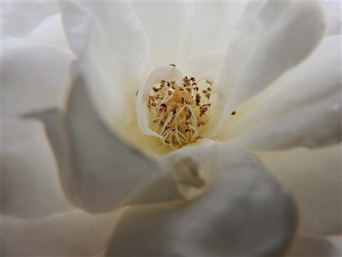 Soft white 3
