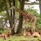 Safari Park 170611 - 153-Edit-2