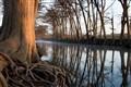 Cypress Teees