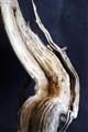 Dead bark