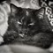 Cat Ballou_