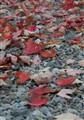 Fall around Victoria Park  - October 29, 2009  - 1
