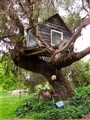 The Children's Tree House