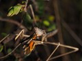 Mantis with Lunch