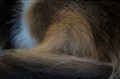 Kita's tail