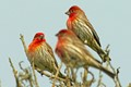 Finches (I think)