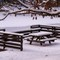 Beach Bench in Snow (D300): Snow on wood picnic bench under tree beside pond at Clear Creek State Park, Pennsylvania