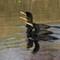 3-23-14 cormorant #21 (1 of 1)
