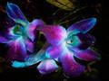 SINGAPORE-ORCHIDS