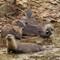 Pt. Reyes otters IMG_9457