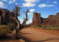 Monument Valley Tree