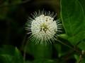 Wildflower, DSC00466