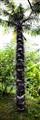 Spikey Palm Tree