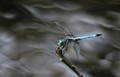 Dragonfly and creamy waters