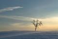 puu lumessa
