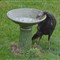 Turkey in bird bath A