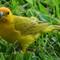Saphron Finch 7-8 (1 of 1)