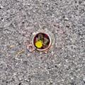 Image taken in the asphalt parking lot of a workshop